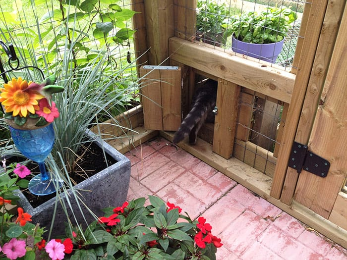Entry way into the cat tunnel