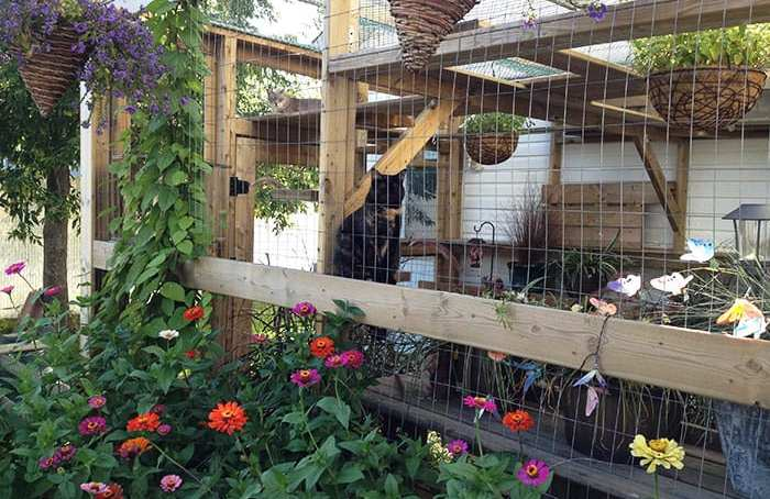 Chirpy Cat Catio