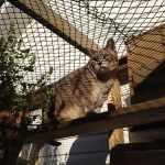 cat on super highway in catio