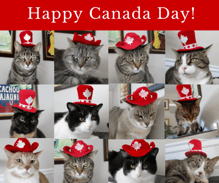 Canada Day with the Chirpycats