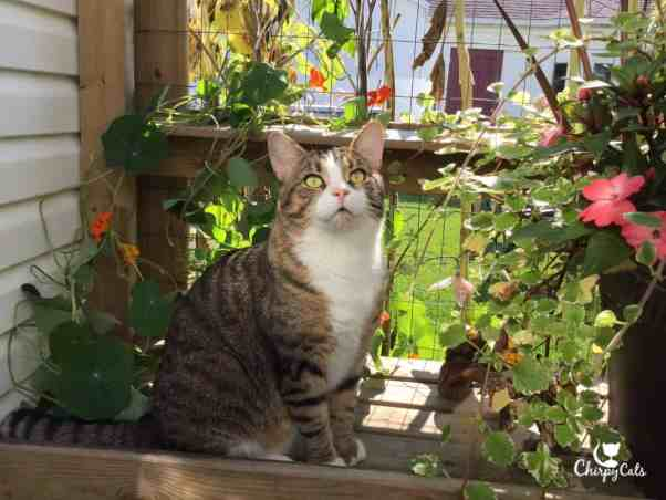 Charlie loves his garden and likes his picture taken next to the flower pots.