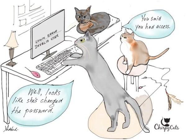Cats at computer