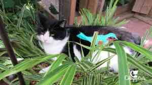 Cat sleeping in pot plant