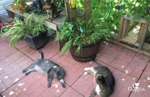 Cats sleeping in catio