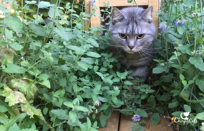Determined cat