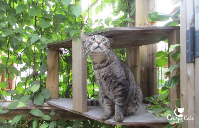Cat with aeroplane ears