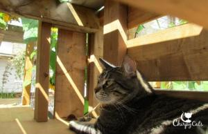 Ollie the cat relaxes in the shaded condo