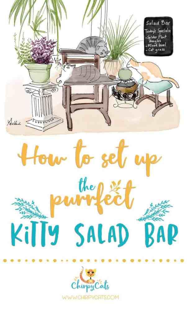 set up a kitty salad bar
