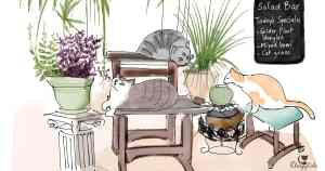 Cats relaxing at the salad bar