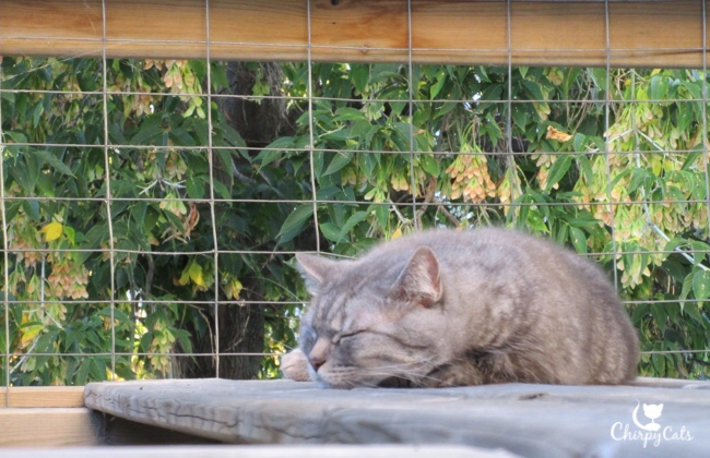 Cat snoozing on catio highway