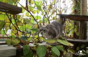 perfect landing for senior cat