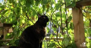 tortie cat and vine