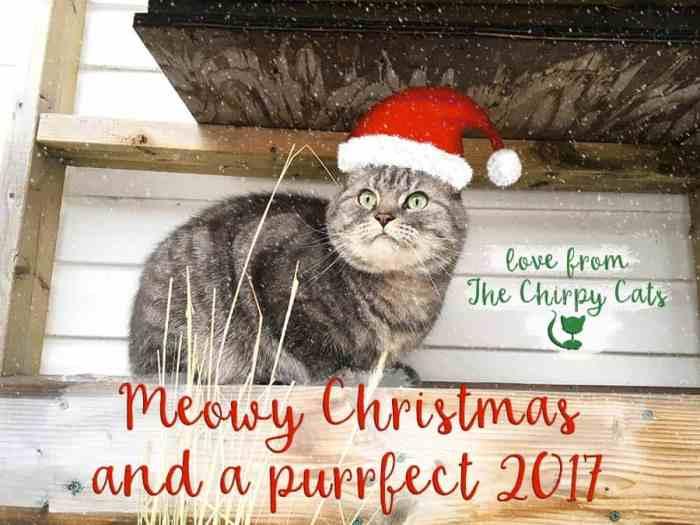 Jackaboo the cat sends warm seasons greetings.