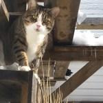 Cat in condo look on contemplative
