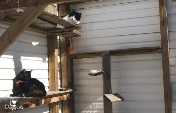 Two cats sitting on the ramps in the sun