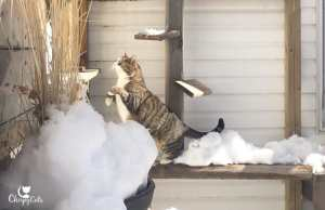 Jumping cat on snow covered ramps
