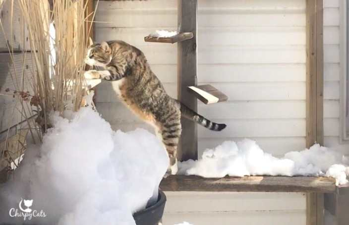 Cat jumps in snow
