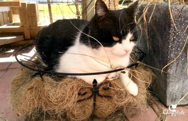 cat sitting on planter basket