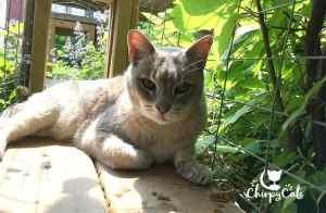 Senior blind cat