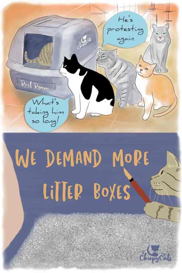 Litter box aversion in multi-cat homes