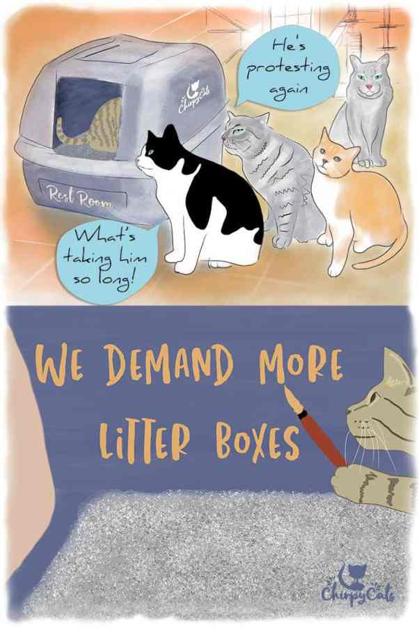 Litter box aversion in multi-cat homes