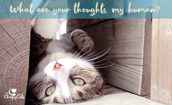 pensive cat in condo