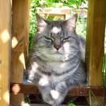Slow blinking cat says i love you