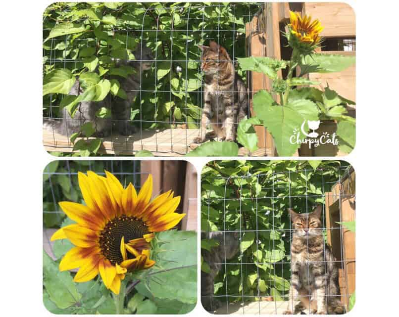 Sunny faces delight the Chirpy Cats catio