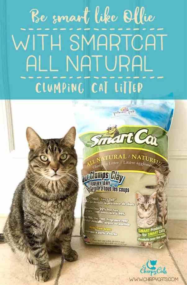 smart cat all natural cat litter