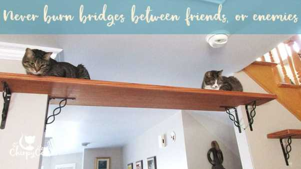 two cats sitting on the cat bridge