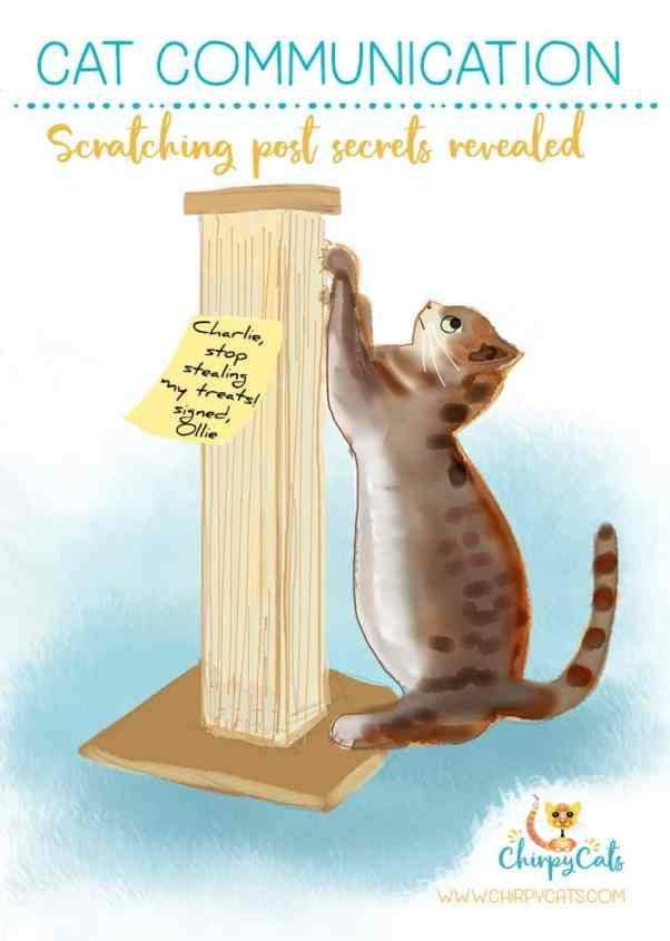 Cat communication: Scratching Post Secrets Revealed