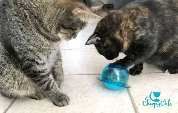 fish bowl toy by Petsafe