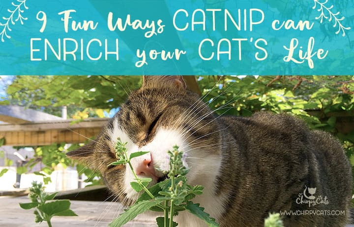 9 Ways catnip can enrich your cat's life