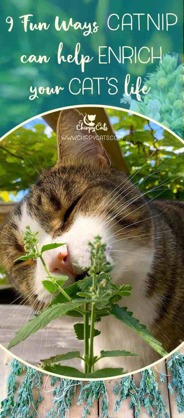 catnip enrichment tips to enhance your cat's world