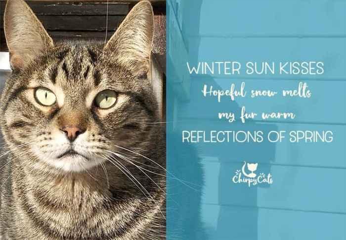 Ollie enjoys some winter sun in the catio