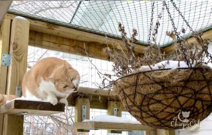 winter catnip hanging basket