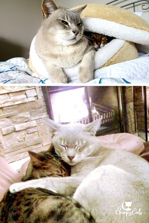 Cuddling kitties in a burger bun bed