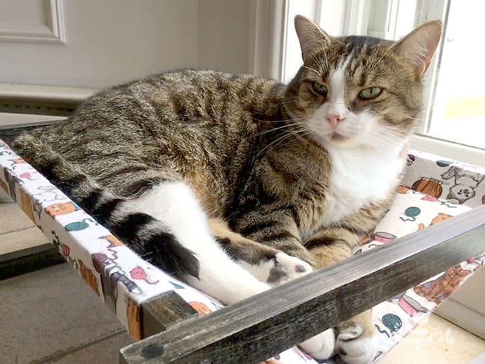 A cat hammock that will keep kitty cool
