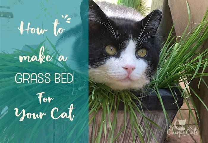 A cat grass bed for your cat
