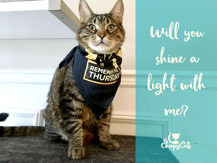 Ollie the rescue cat shines a light for orphan pets
