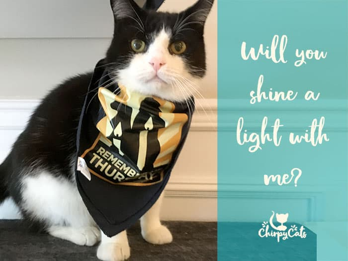 Sly Pie the Masked Tuxedo cat shines a light for shelter pets.