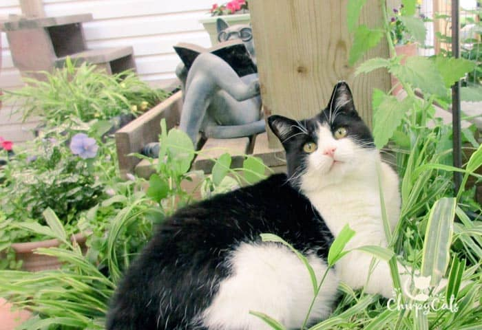 Make a cat grass bed for your kitty