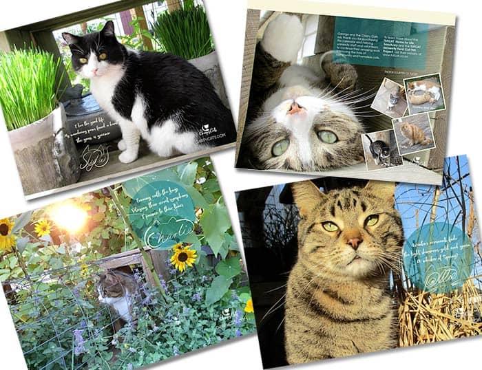 Chirpy cats wall calendar feauring a sneak peek of the calendar contents
