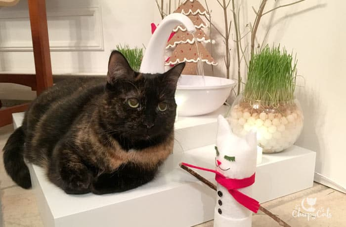 Tortoiseshell cat sits next to the swan fountain at the festive watering hole