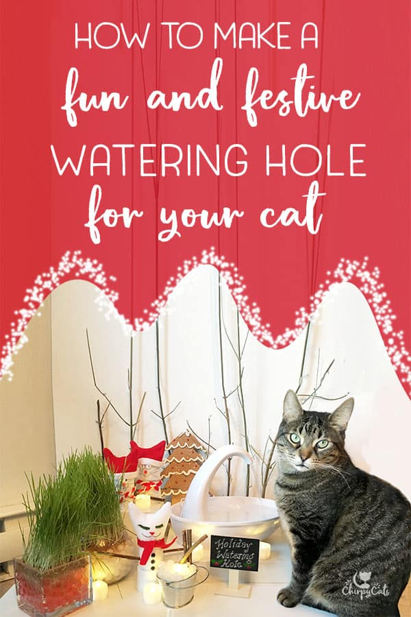 Create a festive cat fountain display to enrich your cat\'s senses