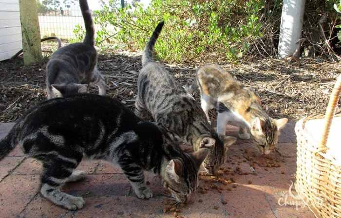 The TUFCAT University of the Western Cape Feral campus cats