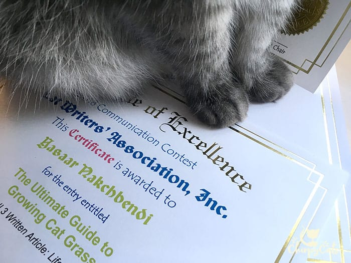 Grey paws sitting on certificate of excellence from the CWA