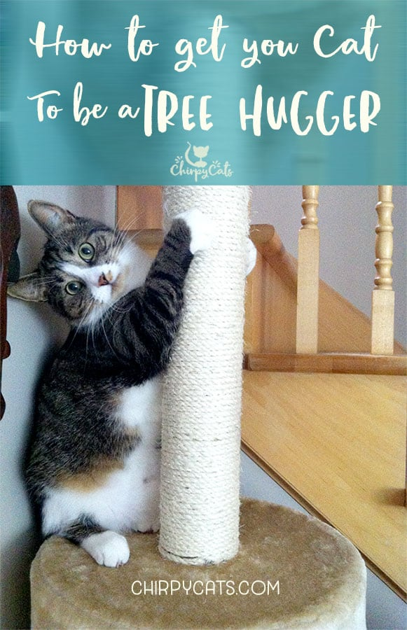 How to Train your Cat to be a Tree Hugger