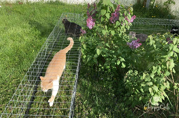 Simple outdoor cat tunnels installed on the grass for cats to explored