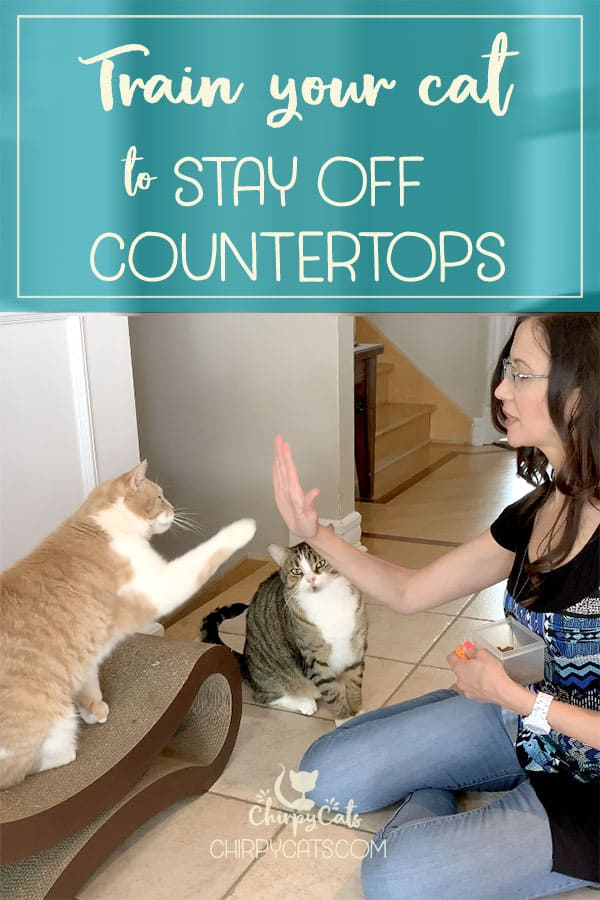 Train your cats to stay off countertops through rewards-based training